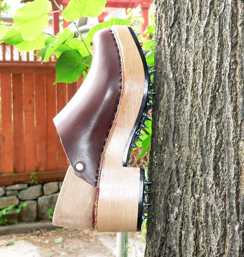 Clog on Tree