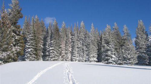 Moutain ski tracks cropped